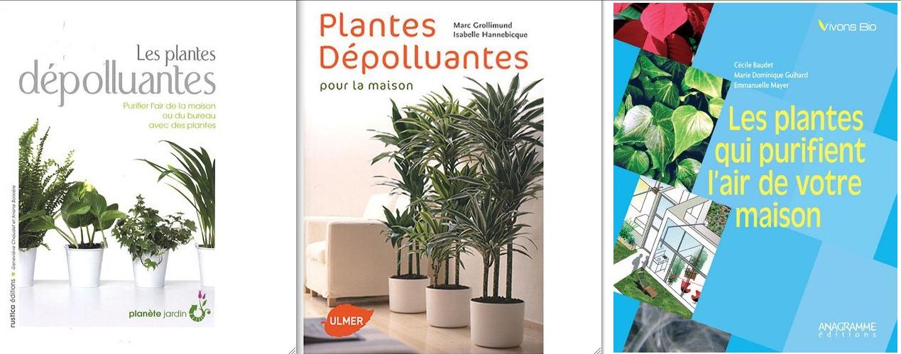 Plantes d polluantes d 39 int rieur ecologie pratique la maison les forums d 39 eco bio info - Plantes depolluantes d interieur ...
